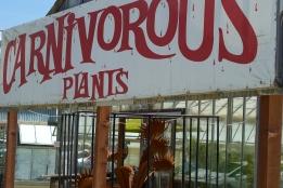 Carnivorous Plants 1